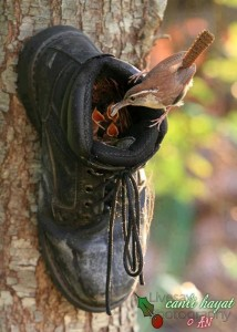 boot and bird recycling idea