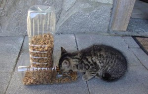 cat feeder recycling idea
