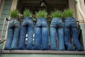 jeans and plants recycling idea